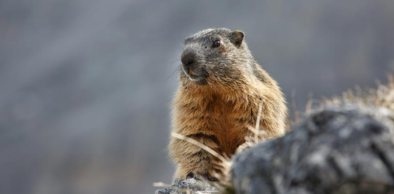 How CSOs Can Avoid the Shadow of a Cyber Security Groundhog Day